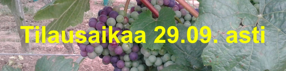 wine, vineyard, viini